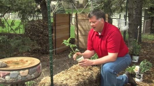 Hay Bale Gardening: Effortless Food Production